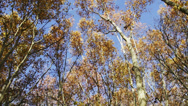 Stock Video Footage of autumn trees