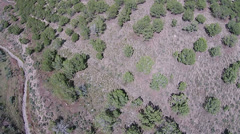 Aerial rural mountain cedar trees trails HD 013 Stock Footage