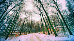 Wintry landscape in Poland Stock Footage