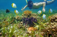 Man in snorkel underwater looks colorful sea life Stock Photos