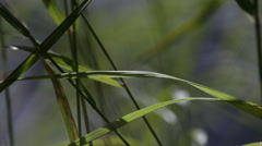 Grasses dancing at the shore of a lake - stock footage