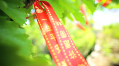 Wishing Tree Banyan happiness wealth prosperity Beijing China Stock Footage