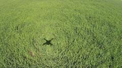 Aerial rural farm wheat field HD Stock Footage