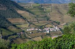 Vineyars in Douro Valley Stock Photos