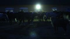 Horses in Stables at Night Stock Footage