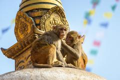 Two macaques on top of chorten Stock Photos