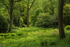Landscape image of beautiful vibrant lush green forest woodland scene Stock Photos