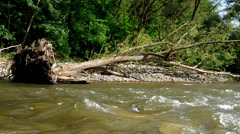 Knocked down a tree on the riverbank Stock Footage