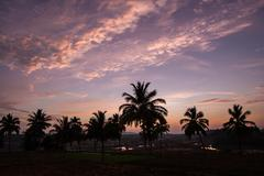 Beautiful sky after sunset and palm tree silhouettes Stock Photos