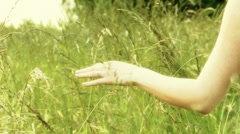 Hand touching the grass Stock Footage