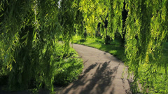 Weeping willow - stock footage