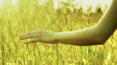Hand touching tall grass. - stock footage