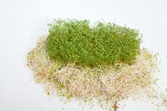 Fresh alfalfa sprouts and cress on white background Stock Photos