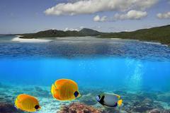 Undersea Marine Life in the Whitsundays Archipelago - stock photo