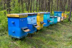 Apiary in forest Stock Photos
