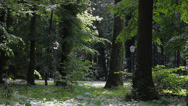 Stock Video Footage of 25 Park Idyll. Visitors walking down a path. Trees in foreground.