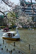 Stock Photo of Boats and cherry blossoms at Ueno Park