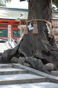 Big Tree At  The Shrine - stock photo