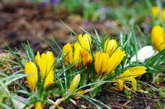 Beautiful spring flowers in the field Stock Photos