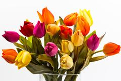 bunch of different colors of tulips - stock photo