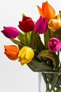 detail of bouquet of tulips in a vase - stock photo