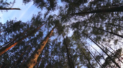 Spinning low angle looking up through forest canopy at trees and sky Stock Footage