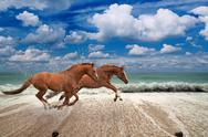 Stock Photo of horses running along seashore