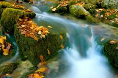 Stream among green stones with autumn leafage - stock photo