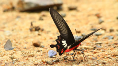 Butterfly on ground in a forest Stock Footage