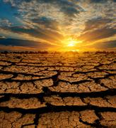 Sunset over leafless earth Stock Photos