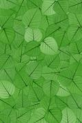 Stock Photo of Green skeletal leaves - background.