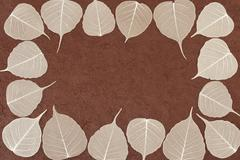 Stock Photo of Skeletal leaves over brown handmade paper - frame