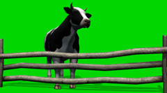 Cow on the pasture - green screen Stock Footage
