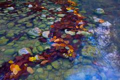 autumn leafage in water - stock photo