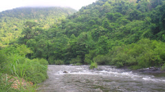 River in deep forest Stock Footage