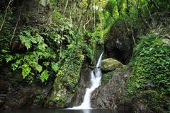 Hidden rain forest waterfall with lush foliage and mossy rocks Stock Photos