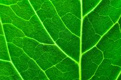 Fresh green leaf close up Stock Photos