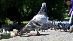 Urban doves love Stock Footage