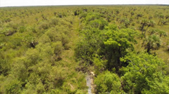 Nature preserve field of palms aerial video Stock Footage