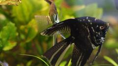 Stock Video Footage of Assorted Tropical Fish in Aquarium 3