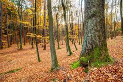Autmn forest Stock Photos