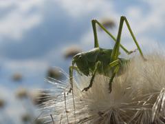 Green grasshopper Stock Photos