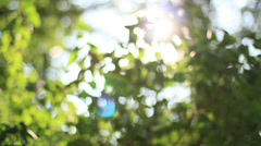 Bokeh Tree Background 3 Stock Footage