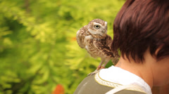 Burrowing owl (Athene cunicularia) Stock Footage