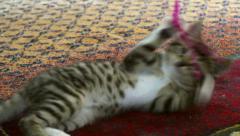 Playful tabby kitten Stock Footage