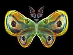 Butterfly Elements Stock Illustration