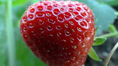 Strawberry  very close up - 02 Stock Footage