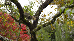 Kitten in tree Stock Footage