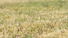 Slider Grass Background Stock Footage