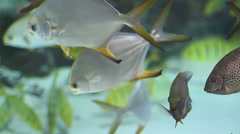 Assorted Tropical Fish in Aquarium 2 Stock Footage